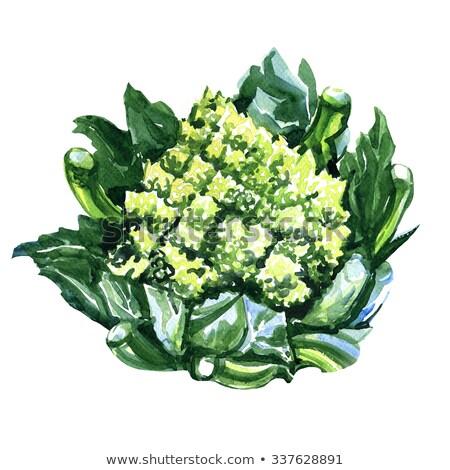 fresh green romanesco broccoli cabbage macro closeup Stock photo © juniart