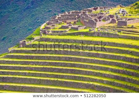 долины · Перу · дороги · дерево · пейзаж - Сток-фото © pxhidalgo
