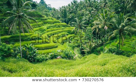 the path on green paddy field and palm trees Stock photo © xuanhuongho