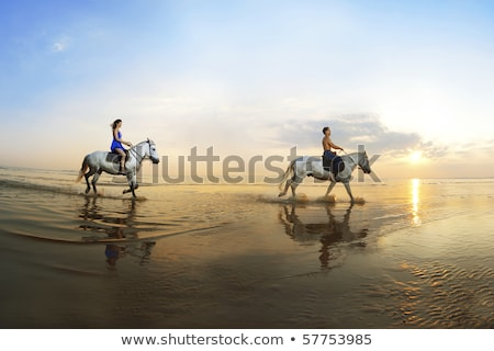 csődör · tengerpart · fekete · ló · sport · tenger - stock fotó © godfer