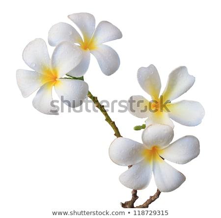 Trópusi virág fűmező fa tavasz természet terv Stock fotó © nuiiko