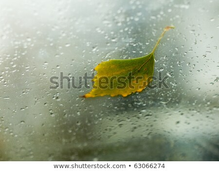 Fallen Autumn Birch Leaf On The Windshield Of A Car Inside Shot Foto stock © pashabo