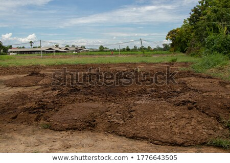 Cow manure  Stock photo © bdspn