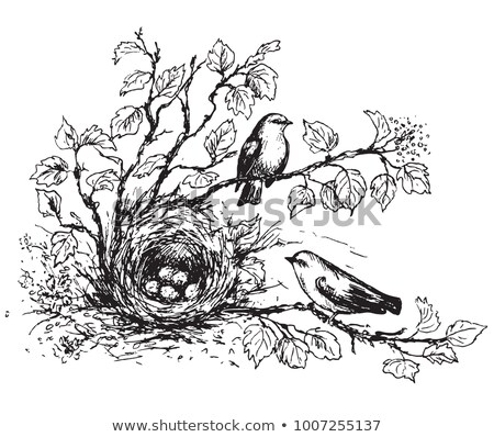 hidden bird house stock photo © mpessaris