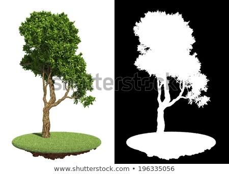Decorative Green Tree with Detail Raster Mask. Stock photo © tashatuvango