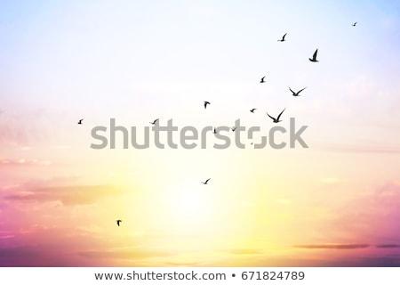 aves · voador · céu · Nova · Zelândia · natureza - foto stock © ruslanomega