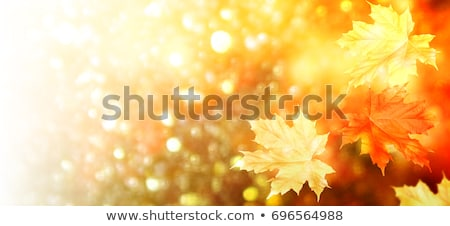 White birch leaves in indian summer Stock photo © stevanovicigor