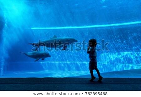 çocuk erkek yunus örnek küçük oynama Stok fotoğraf © lenm