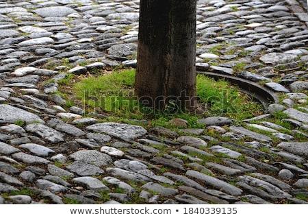 brown and gray paving of rectangular shape stock photo © tashatuvango