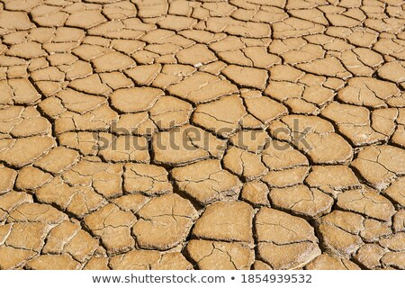mudcracks and soil drought stock photo © stevanovicigor