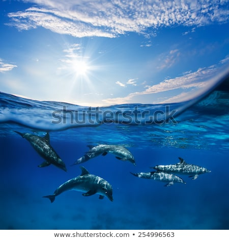 swimming in sea  dolphins Stock photo © neirfy