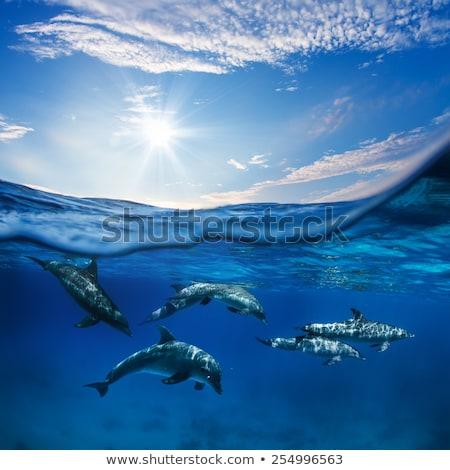 natuurlijke · turkoois · zee · wateroppervlak · Blauw · zeewater - stockfoto © neirfy