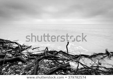 blanco · negro · mar · olas · rocas · playa - foto stock © photocreo