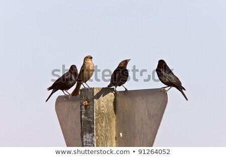 Saskatchewan Canada nature oiseau Photo stock © pictureguy