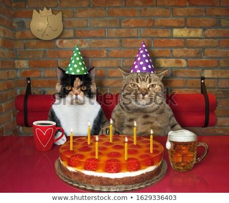 ストックフォト: 愛する · カップル · カフェ · 表 · 面白い · 猫