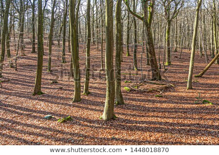 forest in wintertime with leaves in indian summer colors Stock photo © meinzahn