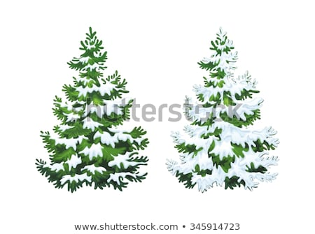 Green fluffy Christmas pine tree in snow Stock photo © orensila