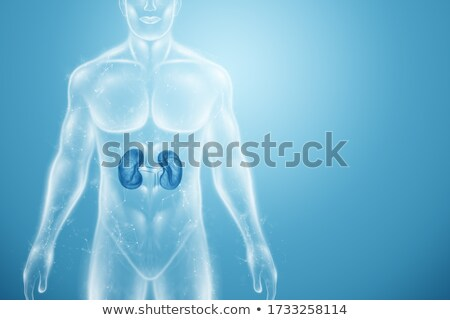 pyelonephritis medicine 3d illustration stock photo © tashatuvango