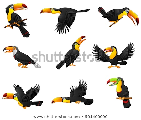 toucans set stock photo © barbaliss