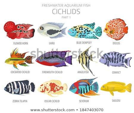 Set collection of aquarium fish Stock photo © studiostoks