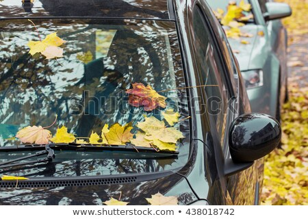 Araba sonbahar akçaağaç yaprağı sezon taşıma Stok fotoğraf © dolgachov