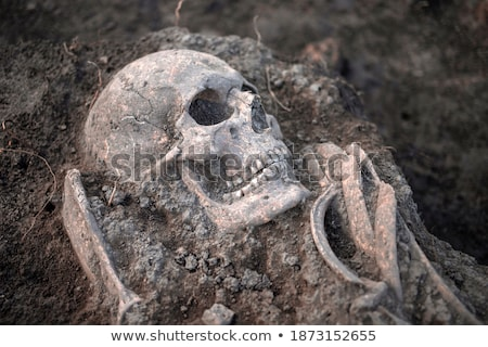 Human skull and bones Stock photo © IS2