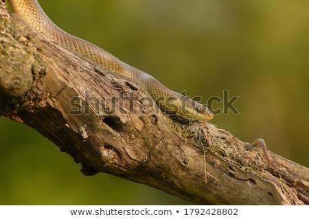 Güzel çocuk yılan pozisyon yüz tıp Stok fotoğraf © taviphoto