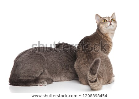 back view adorable cat couple with one looking behind stock photo © feedough