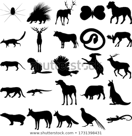 Butterfly Insect Animal Silhouette Stock photo © Krisdog