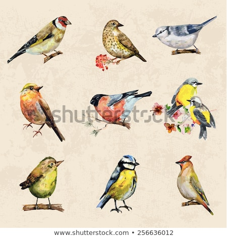 Bird collections Stock photo © colematt