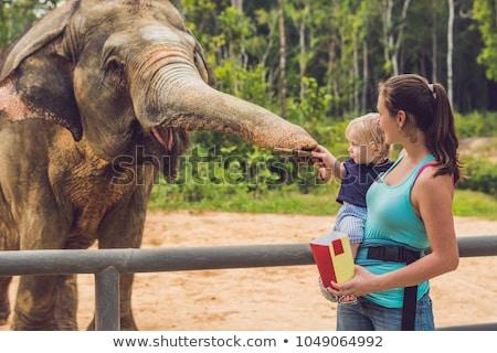 mom and son feed the elephant at the zoo stock photo © galitskaya