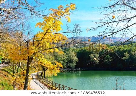 gyönyörű · erdő · napfény · égbolt · tavasz · erdő - stock fotó © serg64