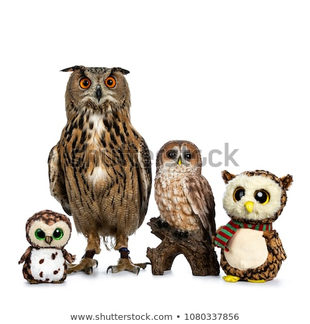 ceramic and turkmenian eagle owl on white background stock photo © catchyimages
