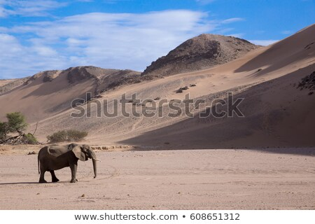 Elefante rock montana Namibia atracción turística punto Foto stock © artush