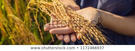 zöld · rizsföld · gazda · kéz · Banglades · tájkép - stock fotó © galitskaya