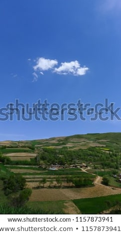 landscape with row of trees in a farming area under blue sky Stock photo © meinzahn