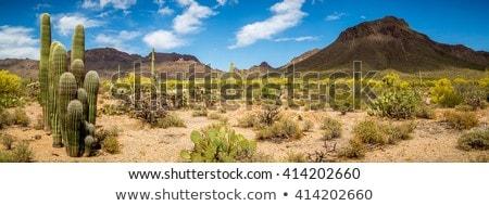 set of desert landscape stock photo © bluering