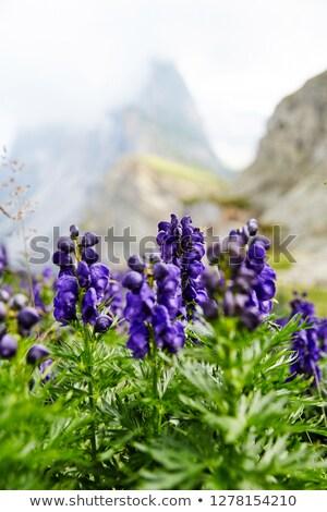 Lavendel bloemen groeiend top berg paars Stockfoto © frimufilms