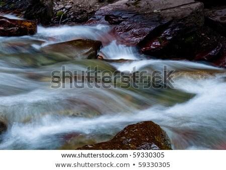 Bewegende stream bomen ruw snel water Stockfoto © bobkeenan
