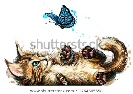 メイン州 猫 子猫 見える サイド ストックフォト © CatchyImages