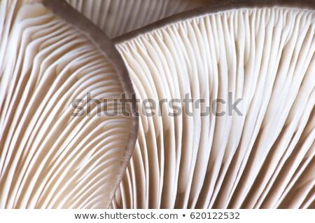 Brown texture close-up. Stock photo © homydesign