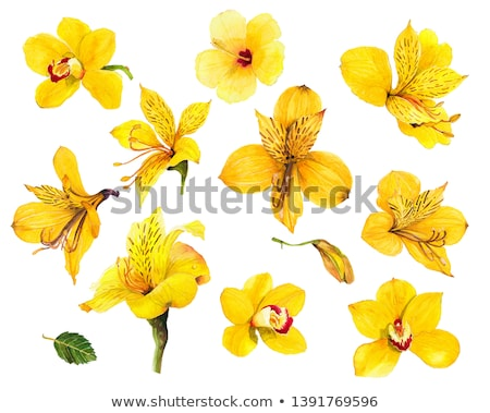 alstroemeria flowers stock photo © trala