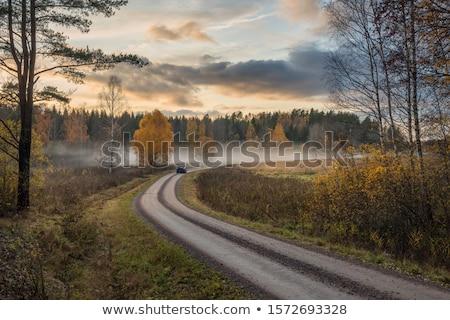 Швеция синий свободу сельского хозяйства панорамный Сток-фото © mikdam