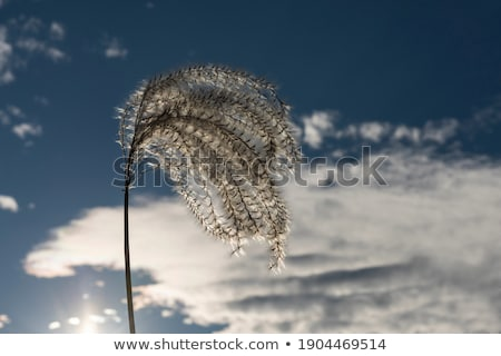 Gras witte hemel licht ontwerp achtergrond Stockfoto © tilo