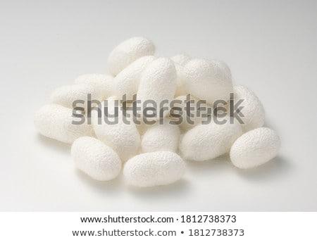 Silkworm cocoon white background Stock photo © bluering
