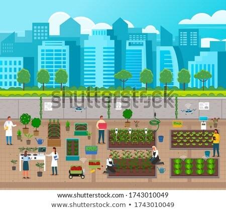 Városi mezőgazdaság város gazdálkodás modern technológiák Stock fotó © robuart