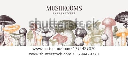 Ehető gomba gombák étel háttér ősz Stock fotó © M-studio