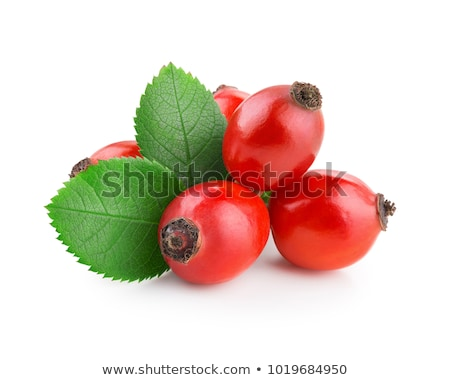 Pink rose hip petals with leaves Stock photo © furmanphoto