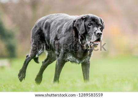 Very old dog Stock photo © ivonnewierink