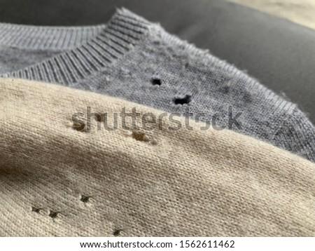 moth Stock photo © patrimonio